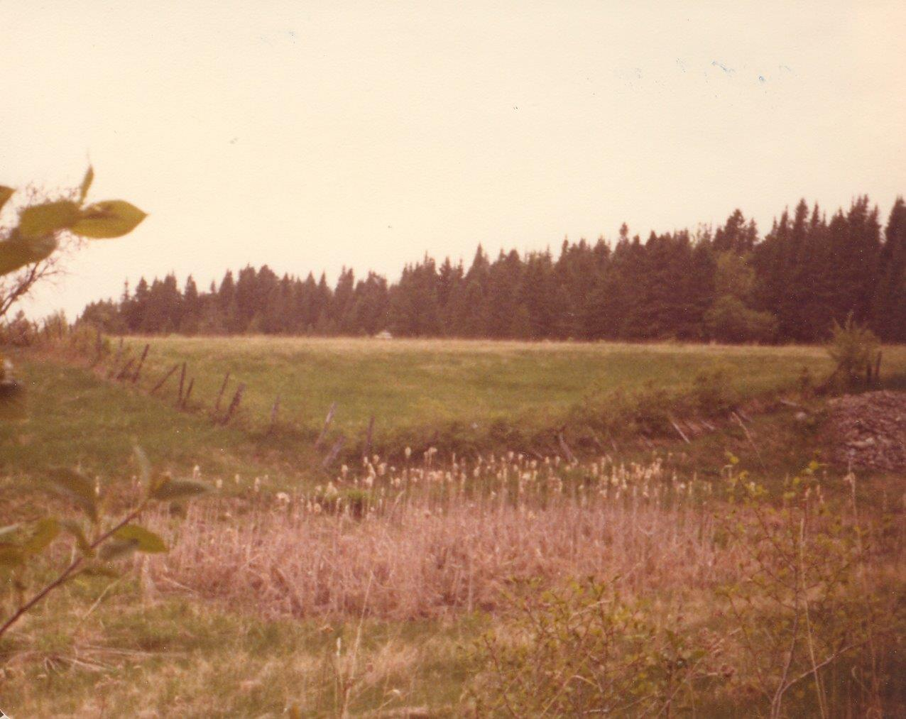 198005xx-ra-013-eco Cabin In Distance-Randboro