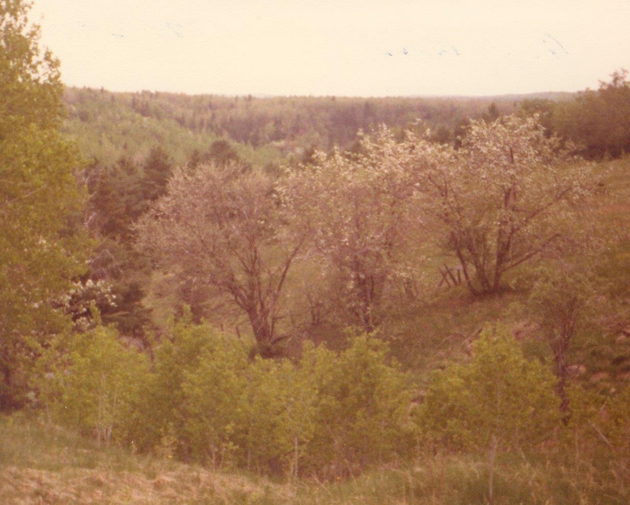 198005xx-ra-014-view-Randboro