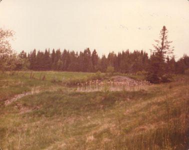 198005xx-ra-015-Marsh-Randboro
