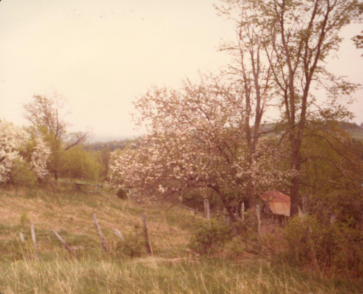 198005xx-Apple Blossoms And Barn-Randboro