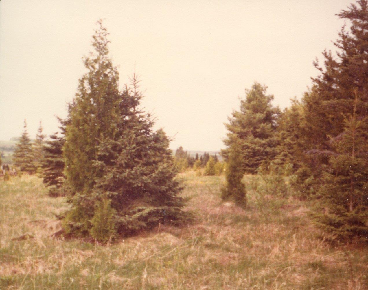 198005xx-ra-026-view From Cabin-Randboro