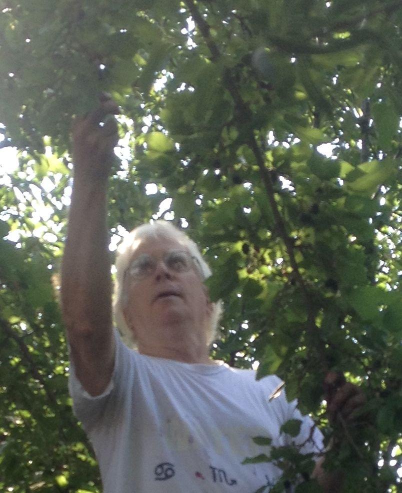 2015-0714-ra-picking-mullberries 0011