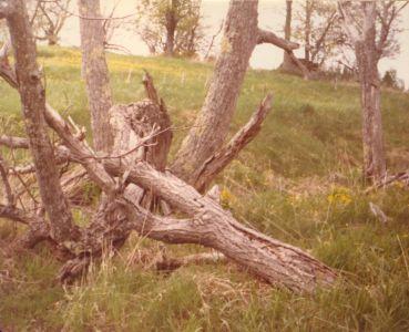 198005xx-ra-010-around Barn-Randboro