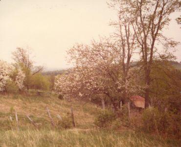 198005xx-Apple Blossoms And Barn-Randboro
