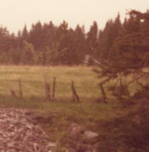 198005xx-ra-017a-eco Cabin In Distance-Randboro